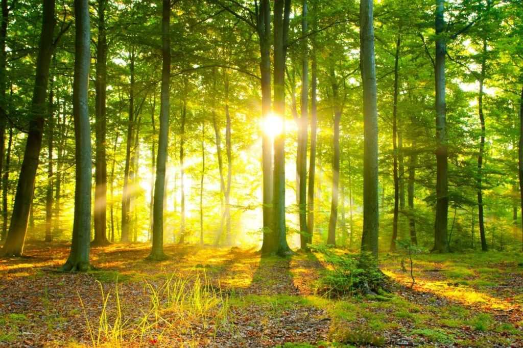 Enerji Fotowoltaika Ekologia Nowe drzewa